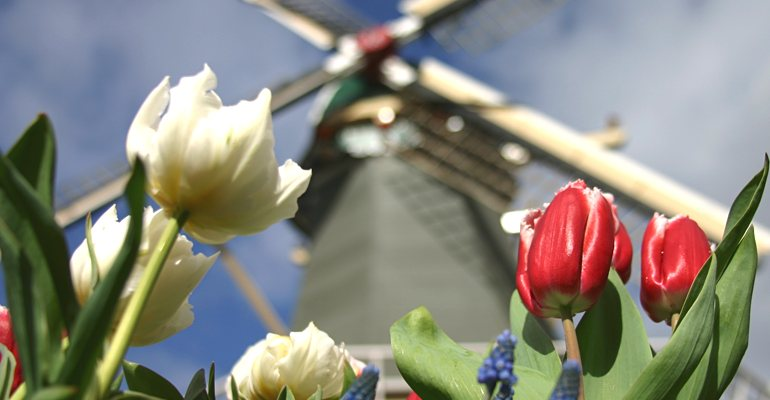 Keukenhof Tulip Park Windmill