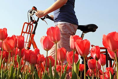 Best Tulip Fields Amsterdam Holland - Bicycle Ride Tulip Fields