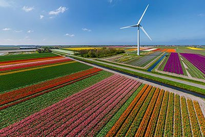 Best Tulip Fields Amsterdam Holland - Fly with helicopter over tulip fields