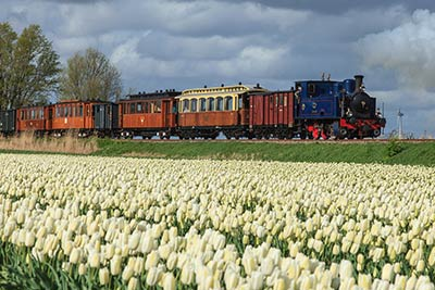 Best Tulip Fields Amsterdam Holland - Steam Tram