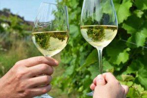 Taste local wine at a Dutch Vineyard