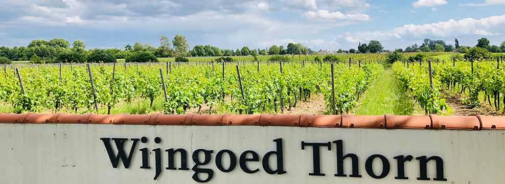 Explore local vineyards, taste exclusive Dutch wines